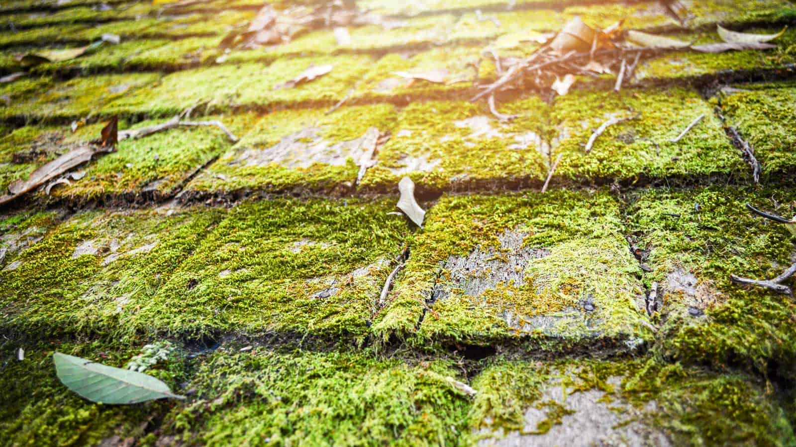 Moss is damaging for your roof. Have it removed by professionals as soon as possible.